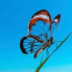 arimeo Fensterfalzlüfter kleinerer Halm Schmetterling